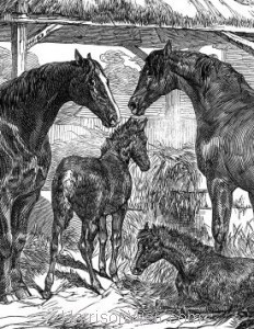 Detail: Prize Mares and Foals, Northamption, 1847