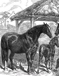 Detail: Prize Mares and Foals, Northampton, 1847