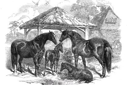 1847 Prize Mares and Foals, Northampton 1847 by Harrison Weir