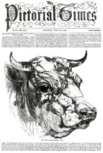 1847 Short Horn Bull by Harrison Weir