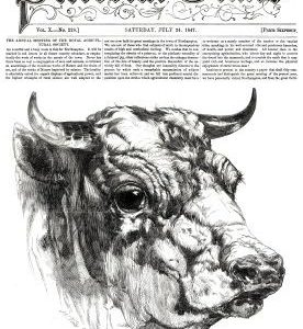 1847 Short Horn Bull by Harrison Weir