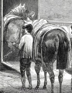 Detail: The Rail, The Horse-Box, by Harrison Weir
