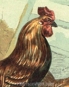 Detail: Barn Door Fowls, by Harrison Weir