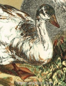 Detail: 1854 - Geese, by Harrison Weir