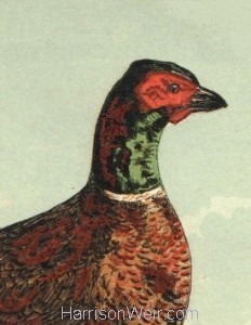 Detail: 1854 Pheasant, by Harrison Weir