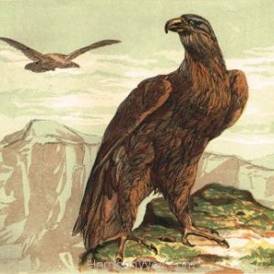 1854 The Golden Eagle, by Harrison Weir