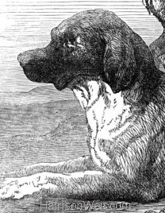 Detail: St.Bernard Dog owned by Mr Albert Smith