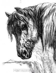 Detail: 1858 Suffolk Punch by Harrison Weir