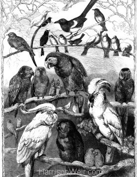 1858 Birds from the Crystal Palace Show by Harrison Weir