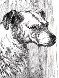 Head Detail: 1858 The Drovers Dog by Harrison Weir