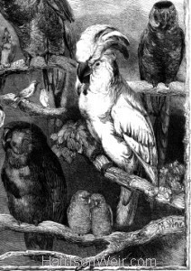 Detail 4: 1858 Birds from the Crystal Palace Show by Harrison Weir