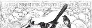 Header: Birds from the Crystal Palace Show