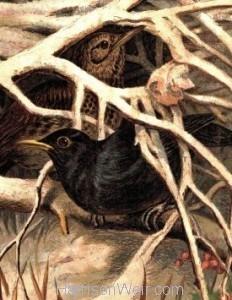 Detail: 1859 Blackbird and Thrush in Covert by Harrison Weir