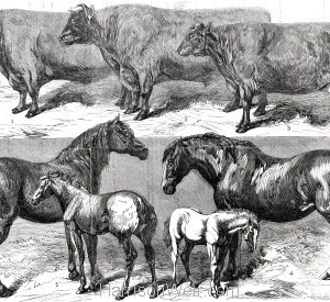 1859 Prize Cattle & Horses at Warwick, by Harrison Weir