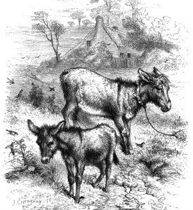 1860 A Young Ass by Harrison Weir