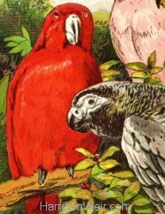 Detail: c1860 Scarlet Lory etc..by Harrison Weir, from Beetons Book of Birds ..