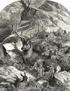 1860 Wild Stag by Harrison Weir