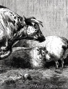 Detail: 1861 Prize Cattle at the Smithfield Club Cattle Show, by Harrison Weir