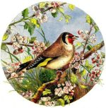 1861 The Goldfinch by Harrison Weir