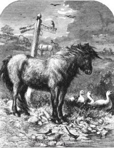 1861 Old Dobbin by Harrison Weir