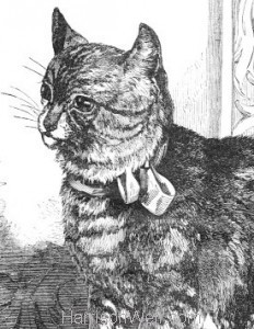 Detail: 1861 The Cat by Harrison Weir