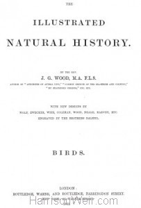 Detail: Title Page from Woods Natural History of Birds