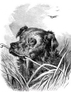 1863 The Dog That Ran Away With The Brushes by Harrison Weir