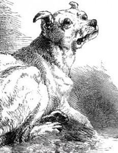 """1864 A """"Bosom"""" Friend, by Harrison Weir"""