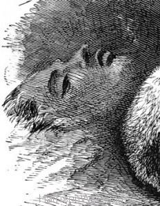 "Detail: A ""Bosom"" Friend, by Harrison Weir"