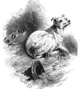 "1864 A ""Bosom"" Friend, by Harrison Weir"