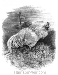 1864 Poor Meggy's Grave by Harrison Weir