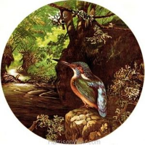 1864 The Kingfishers Haunt by Harrison Weir
