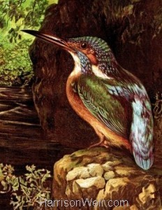 Detail 2: 1864 The Kingfisher's Haunt by Harrison Weir