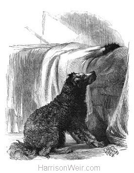 1864 The Shepherd-Dog's Affection by Harrison Weir