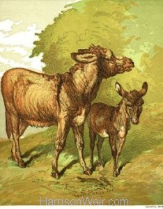 1866 Ass and Foal by Harrison Weir