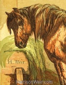 Detail: 1866 Charlie by Harrison Weir