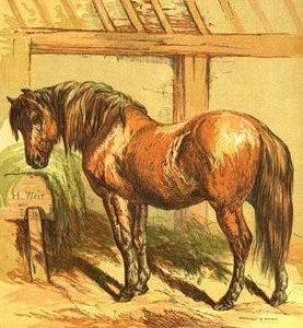 1866 Charlie by Harrison Weir