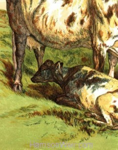 Detail: 1866 Cow and Calf by Harrison Weir