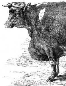Detail: 1866 Prize Animals at the Smithfield Club Cattle Show, by Harrison Weir