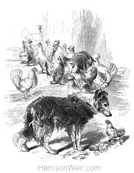 1866 Jack in the Poultry Yard, by Harrison Weir