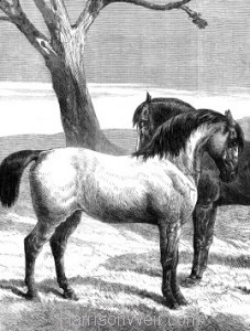 Detail: Prize Horses at Islington, by Harrison Weir
