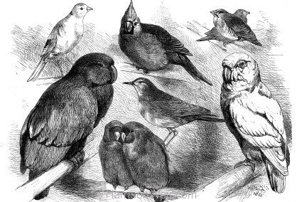 1866 Prize Birds at the Crystal Palace Show. By Harrison Weir