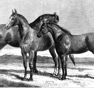 1866 Prize Horses, Hunters, at the Agricultural Hall, Islington. By Harrison Weir