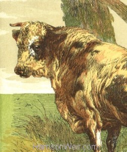 Detail: 1866 An Angry Bull by Harrison Weir