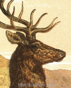 "Detail"" 1866 Captain Stag by Harrison Weir"