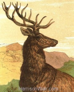 Detail: 1866 Captain Stag by Harrison Weir
