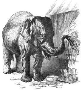 1866 The Elephant and Cobblers by Harrison Weir