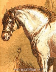 Detail: 1866 Willie's Handsome Pony by Harrison Weir