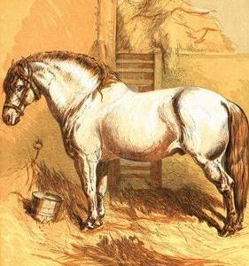 1866 Willie's Handsome Pony by Harrison Weir