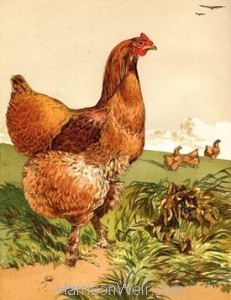 1867 Cinnamon Cochin Hen by Harrison Weir